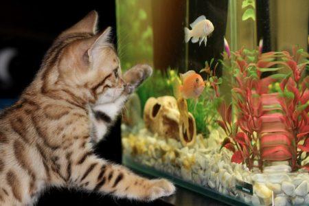 What do aquarium fishes teach us?