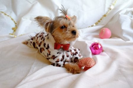 Glamorous dogs, pictures