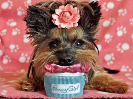 The fashion for glamorous dogs