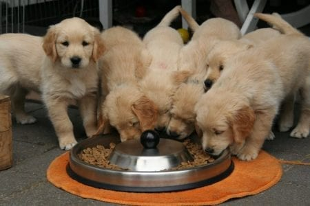 Glycemic Levels in Dogs and Cats